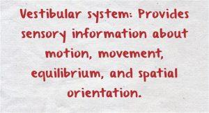 Vestibular-system